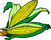 Desenho Espiga de milho  pintado por Milho Verde