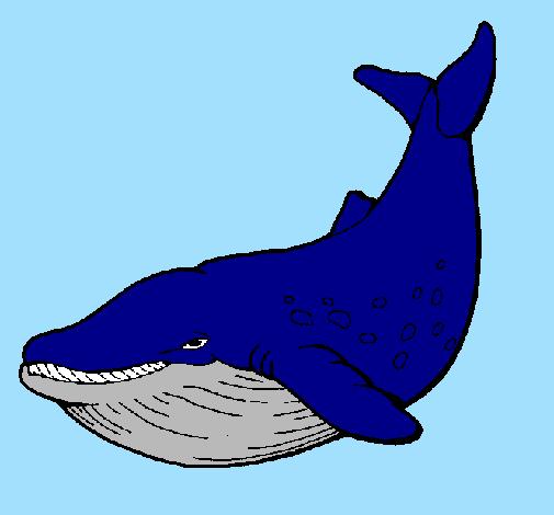Resultado de imagem para desenho baleia azul