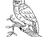 Desenho Coruja pintado por coruja