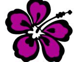 Desenho Flor surfista pintado por flor de surf  =