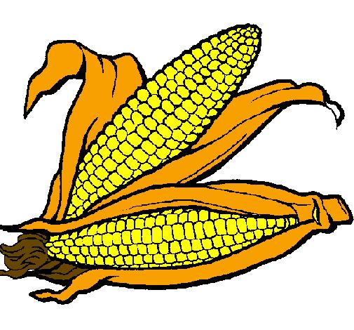 Desenho De Espiga De Milho Pintado E Colorido Por Usuário Não