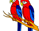 Desenho Louros pintado por arara