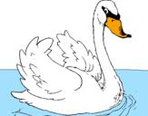 Desenho Cisne na água pintado por anónimo