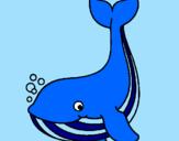 Desenho Pequena baleia pintado por Sofia