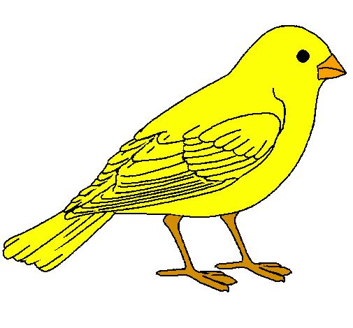 Desenho De Pardal Pintado E Colorido Por Usuário Não