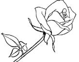 Desenho Rosa pintado por rosa