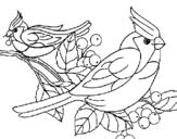 Desenho Pássaros pintado por CALOPSITA