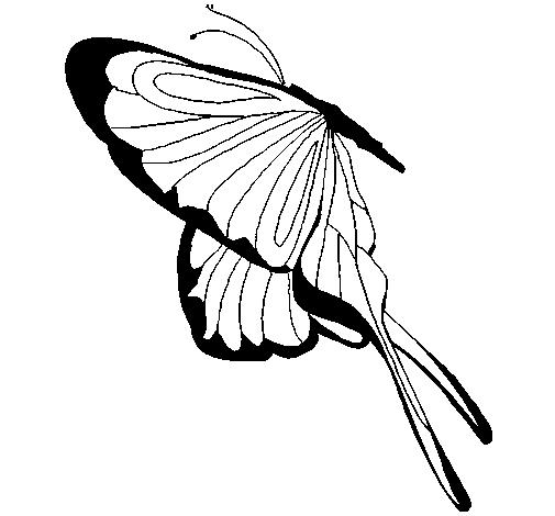 Borboleta com grandes asas