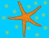 201150/estrelita-do-mar-animais-o-mar-pintado-por-nela-1005428_163.jpg