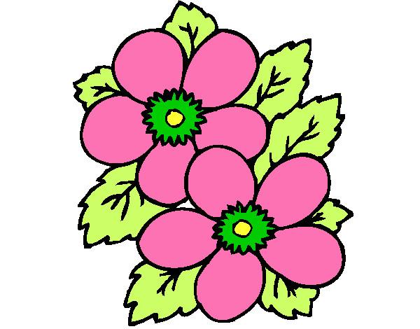 Desenho De Flores Primavera Pintado E Colorido Por Fdocinhoo