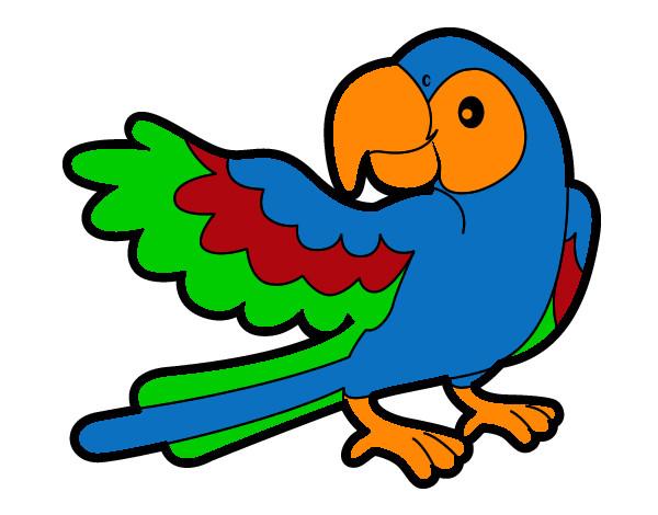 desenho de arara pintado e colorido por wlamir o dia 16 de março do 2012
