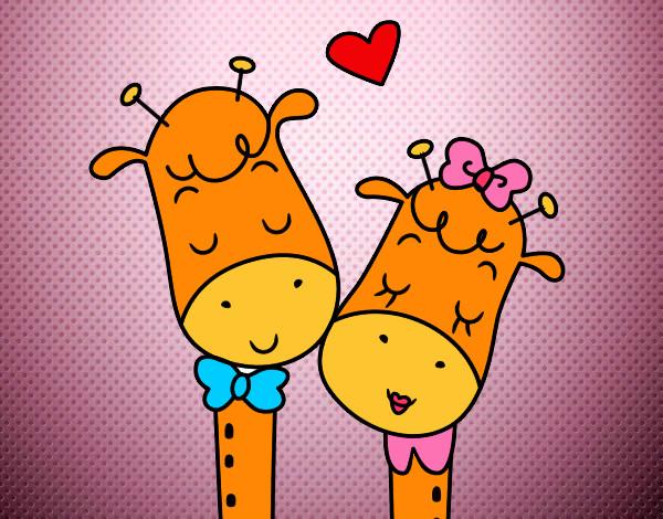 osa casais girafas[