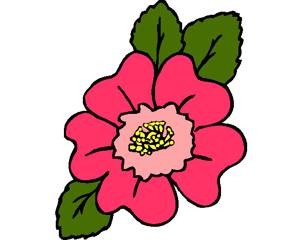 desenho de narciso pintado e colorido por rosa o dia 28 de abril do 2012