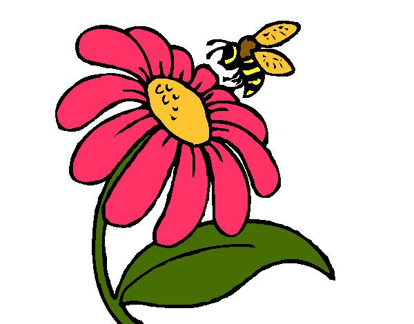 imagens de flores coloridas para imprimir wallpaper directory