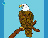 Desenho Águia num ramo pintado por Helen2012