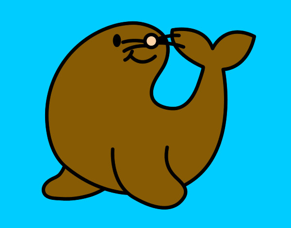 desenho de foca fofa pintado e colorido por bertha o dia 20 de
