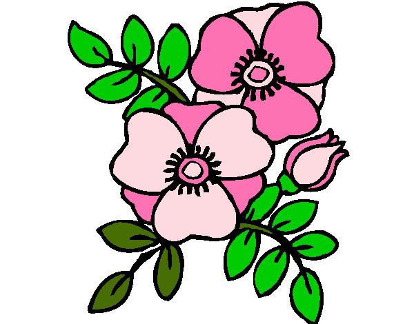 desenho de flor rosa pintado e colorido por amandass o dia 06 de