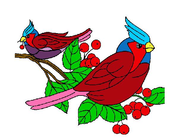 Desenho de passaros coloridos pintado e colorido por Bellebiju o ...