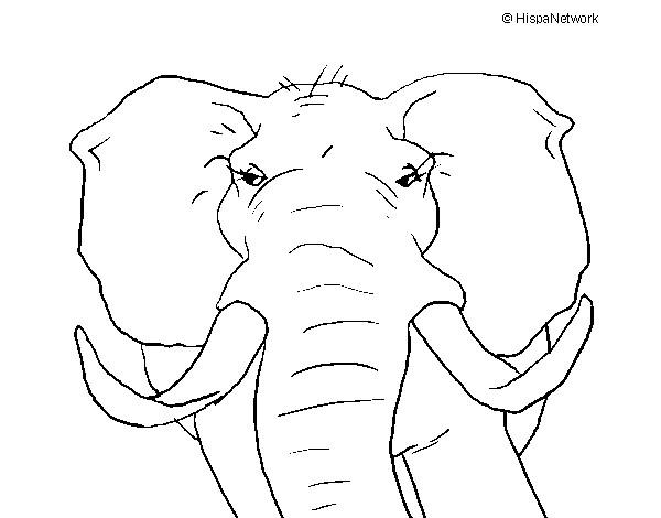 Desenho de Elefante africano pintado e colorido por Luisatrigo o dia ...