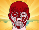 Desenho Músculos da face pintado por jhonatan9