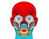 Desenho Músculos da face pintado por anderson14