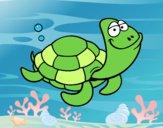 Tartaruga cabeçuda