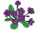 Desenho Primula pintado por annycopque