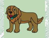 Desenho Cão pigmento pintado por BelMorim