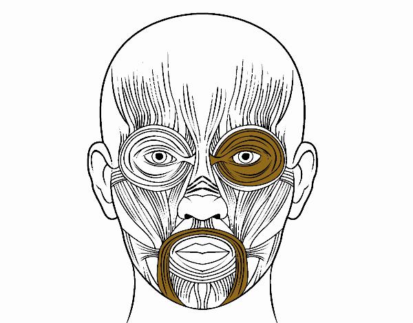 Fabuloso Desenho de Músculos da face pintado e colorido por Usuário não  RC98