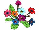 Desenho Primula pintado por tissamatos
