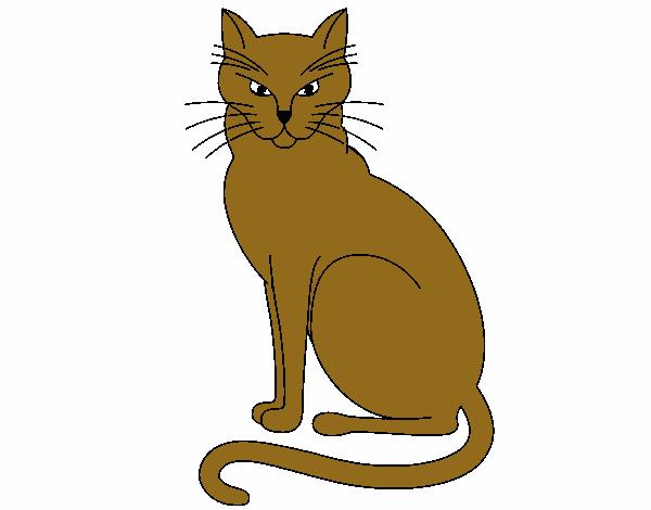 desenho de felino pintado e colorido por apolo o dia 30 de janeiro