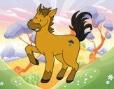 Cavalo a quinta