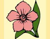 Desenho Flor 4a pintado por carmasiana