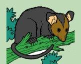 Desenho Ardilla possum pintado por AndressaBR