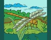 Desenho Libélula pintado por ceciliaz
