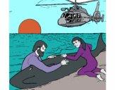 Desenho Resgate baleia pintado por ceciliaz