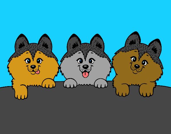 desenho de 3 filhotes de cachorro pintado e colorido por naharaujo o