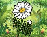 Desenho Margarida selvagem pintado por ImShampoo