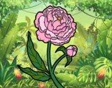 Desenho Peónia pintado por ImShampoo