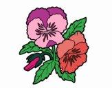 Desenho Flores de amor-perfeito pintado por vanicola