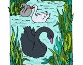 Desenho Cisnes pintado por ceciliaz