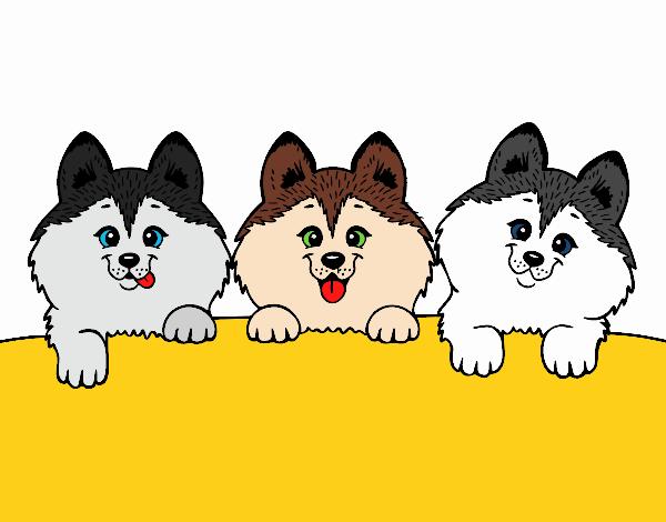 desenho de 3 filhotes de cachorro pintado e colorido por teia72 o