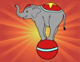 Elefante equilibrista