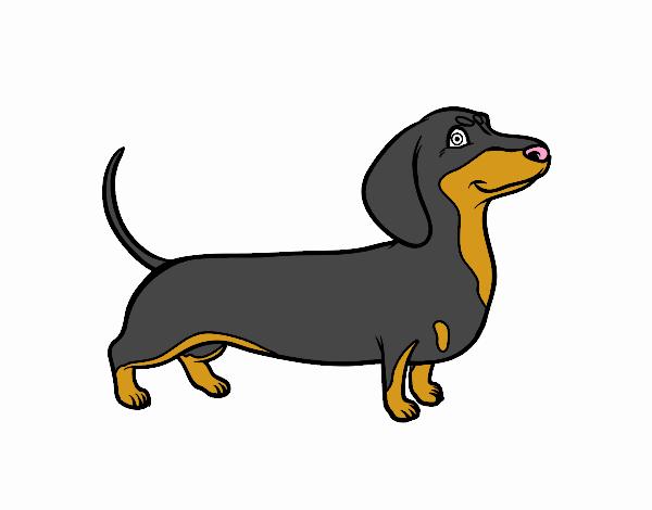 Desenho de c o dachshund pintado e colorido por usu rio for Cane disegno facile