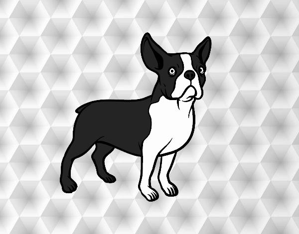desenho de cão buldogue francês pintado e colorido por usuário não