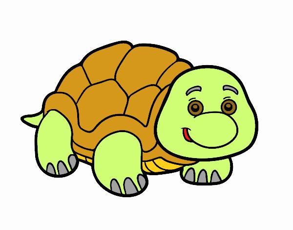 Desenho De Tartaruga De Terra Pintado E Colorido Por
