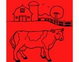 Vaca a pastar