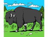 Desenho Búfalo pintado por TUTHU