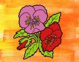 Desenho Flores de amor-perfeito pintado por rosalina
