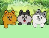 3 filhotes de cachorro